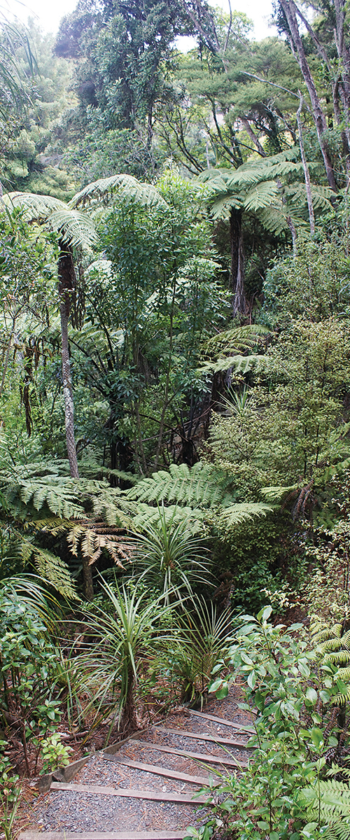 Witheford reserve_2