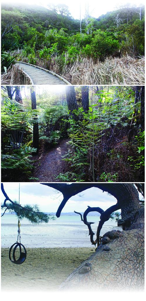 Kauri point centennial pics-2021